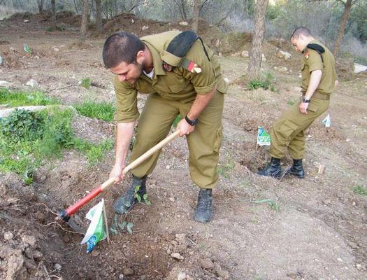חייל שריון נוטע עץ בטו בשבט