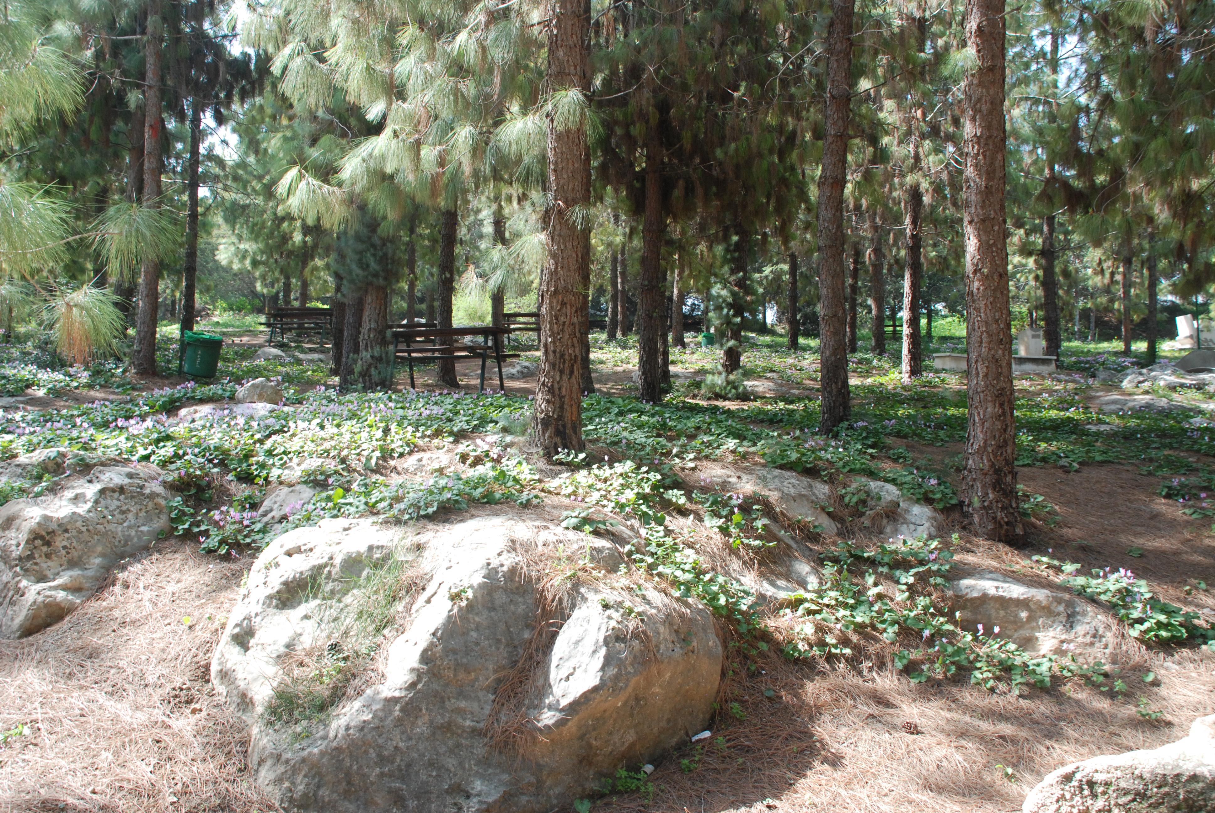 פריחה בפארק העוצבות