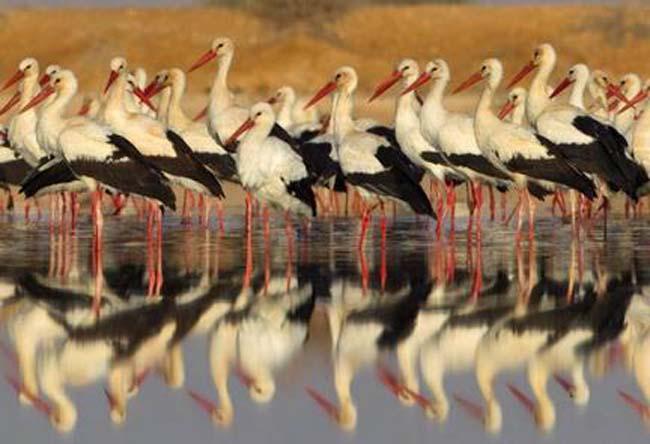 500 מיליון ציפורים חולפות מעל ישראל פעמיים בשנה